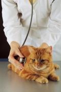 Беременность и домашние животные