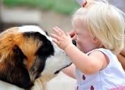 Если ребенок боится собак
