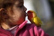 Как заставить ребенка ухаживать за попугаем