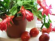 Опасные комнатные растения в детской