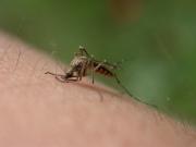 Народные средства против укусов комаров