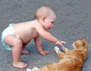 Знакомство детей с дикими и домашними животными