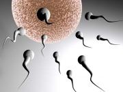 Когда происходит оплодотворение яйцеклетки