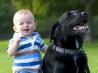 Знакомим младенца с домашним животным