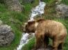 Детские стихи о медведе
