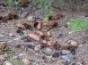 Поделки из листьев и шишек